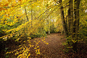 Colorful Photos Prints - Autumnal Woodland II Print by Natalie Kinnear