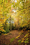 Autumn Photos Digital Art Prints - Autumnal Woodland V Print by Natalie Kinnear