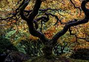 Mike Dawson - Autumn