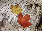 Andrea Kollo - Autumns Fallen Canvas