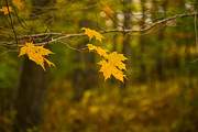Karol  Livote - Autumns Fast Approach