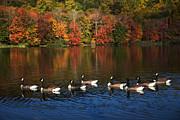 Karol  Livote - Autumns Flock Of Eight