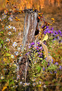 Rustic Colors Posters - Autumns Flowers Poster by Thomas Schoeller
