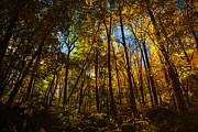Karol  Livote - Autumns Forest