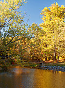 Pond In Park Posters - Autumns Golden Pond Poster by Kim Hojnacki