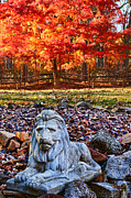 Vivid Fall Colors Framed Prints - Autumns Lion Framed Print by Lee Dos Santos