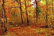 Autumn's Magic Print by Bill Morgenstern