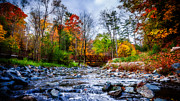 Autumn. Fall Colors - Autumns Memory of Summer by Anthony Rego