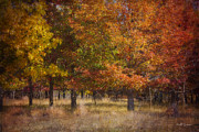 Chalco Hills Recreation Area Prints - Autumns Miracle Print by Jeff Swanson