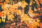 Karol  Livote - Autumns Patience