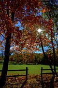 Karol  Livote - Autumns Shine