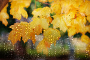 Droplet Prints - Autumns Tears Print by Darren Fisher