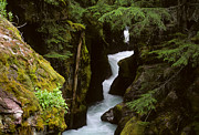Photographers Forest Park Prints - Avalanche Creek Glacier National Park Print by Bob Christopher