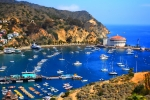 Catalina Prints - Avalon Harbor Print by Cheryl Young