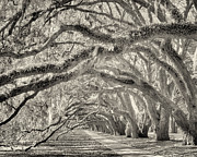 Bill LITTELL - Avenue of Oaks