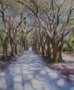St Helena Island Framed Prints - Avenue of the Oaks Framed Print by Henry David Potwin