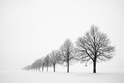 Bare Trees Prints - Avenue with row of trees in winter Print by Matthias Hauser