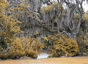 Avery Photos - Avery Island V by Chuck Kuhn