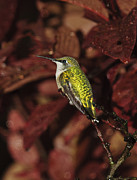 Tiny Leaves Prints - Avian Gem 2 Print by Lara Ellis
