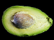 Cook Pyrography Prints - Avocado Pear Print by Tony  Green