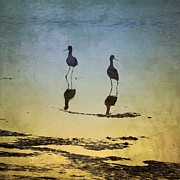Anne Thurston - Avocets at Sunset