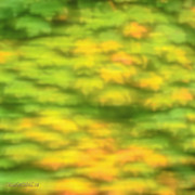 LeeAnn McLaneGoetz McLaneGoetzStudioLLCcom - Awaken to Fall