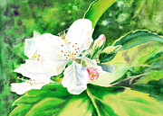 Awesome Painting Framed Prints - Awesome Apple Blossoms Framed Print by Irina Sztukowski