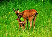 Bambi Prints - Aww Mom Print by Benjamin Yeager