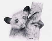 Primate Drawings - Aye-aye by Lucy D