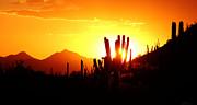 Elaine Malott - AZ Sunset