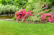 Azalea Bush Photo Prints - Azaela Garden Print by John Trax