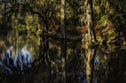 Reflections In River Prints - Azalea Garden reflections at Magnolia Plantation Print by Mark Serfass