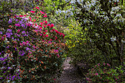Garry Gay - Azalea Trail