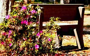 Azalea Bush Photo Prints - Azaleas and Bench   Print by Debra Forand