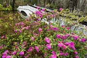 Charleston South Carolina Posters - Azaleas and Bridge Poster by Joseph Rossbach