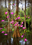 Cypress Swamps Framed Prints - Azaleas in the Swamp Framed Print by Carol Groenen