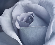 Azul Print by The Art of Marilyn Ridoutt-Greene