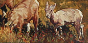 North American Wildlife Painting Posters - Baby Big Horn Poster by Patricia A Griffin