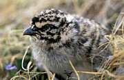 Baby Bird Photos - Baby Bird by Anonymous
