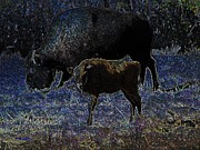 Bison Mixed Media Framed Prints - Baby Bison Blues Framed Print by Mel Steinhauer