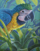 Juvenile Paintings - Baby Blue - Juvenile Blue and Gold Macaw by Susan A Walton