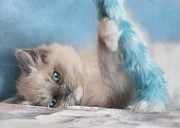 Cute Kitten Digital Art Posters - Baby Blues Poster by Lori Deiter