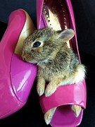 Funny Shoe Prints - Baby Bunny in Stilettos Print by Renee Trenholm