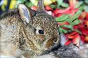 Good Luck Metal Prints - Baby Bunny Rabbit Metal Print by Karon Melillo DeVega