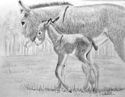 Donkey Drawings Framed Prints - Baby Donkey Framed Print by Dave Alwin