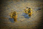 LeeAnn McLaneGoetz McLaneGoetzStudioLLCcom - Baby Ducks