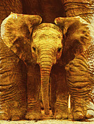 Circus Elephant Posters - Baby Emmas Baby Elephant Poster by Jack Zulli