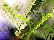 Fuzzy Digital Art - Baby Ferns Unfurling for Jim by Phyllis Kaltenbach