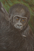 Protection Drawings Posters - Baby Gorilla - Little Djemba Poster by Jill Parry