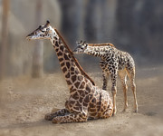 Zoo Animals Photo Prints - Baby Kisses Print by Tessa Fairey
